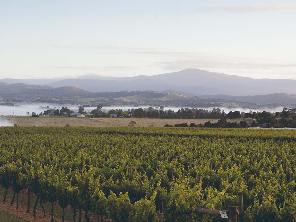 Punt Road Wines, Yarra Valley and Dandenong Ranges, Victoria, Australia